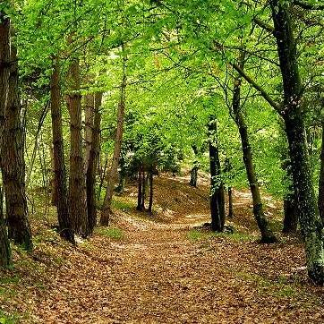Gestione patrimonio boschivo e forestale